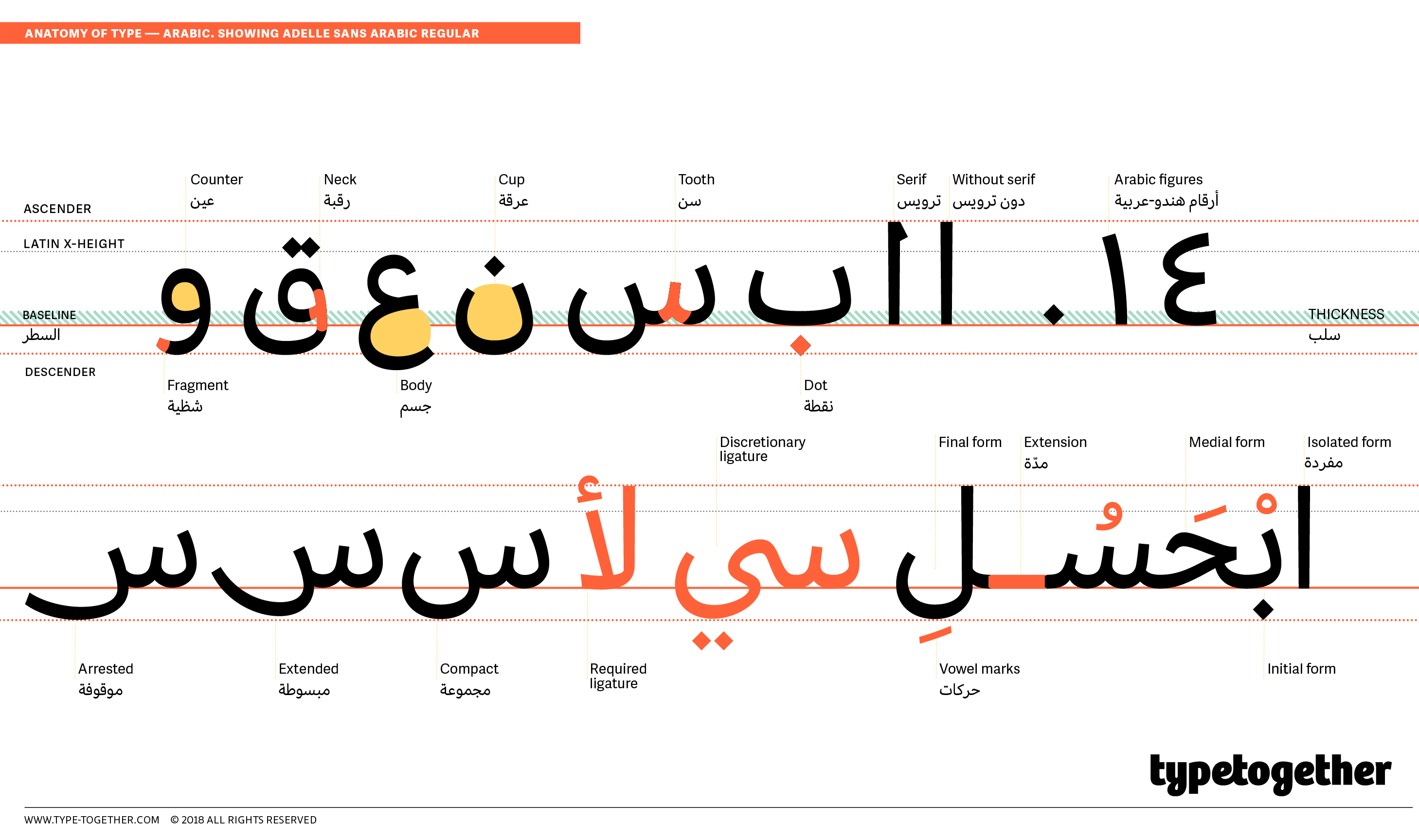 Arabic Type Anatomy | TypeTogether